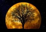 Die 5 Mondzyklen.
