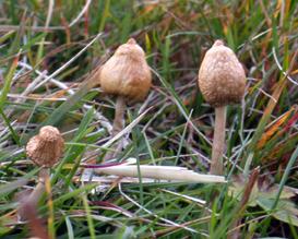 Magische-Pilze