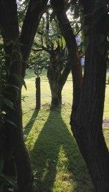 Guscha Garten (9)