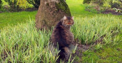 Sari, die Garten Katze